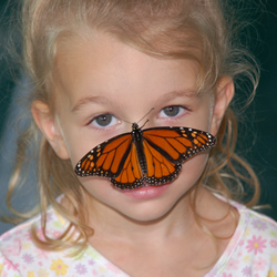 "Butterflies fall into the ""non-scary"" category for bugs. (photo Northeast Tarrant County Kiwanis)"