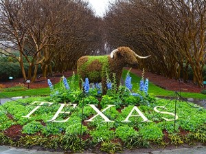The Dallas Arboretum welcomes Texas-themed topiaries to Dallas Blooms. (photo: Dallas Arboretum)