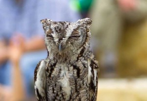 Stay up late for an Owl Prowl at the Heard Natural Science Museum & Wildlife Sanctuary.  (Photo: Heard Museum)