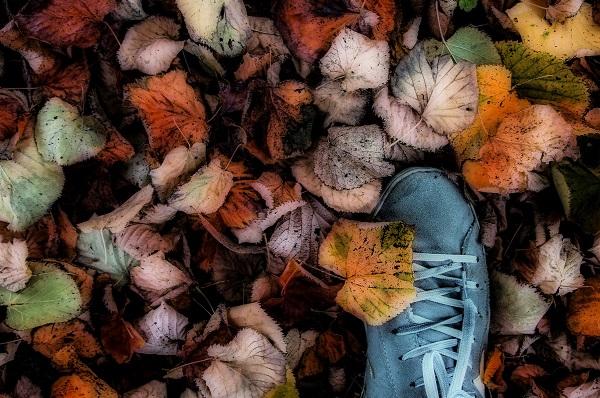 flickr post