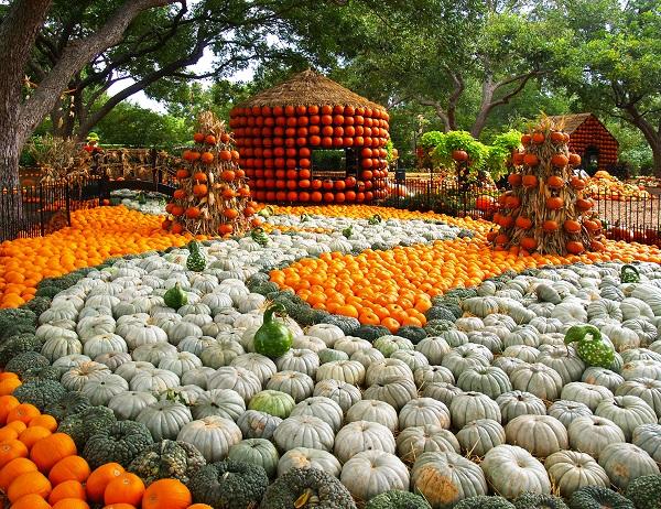 Photo: Dallas Arboretum and Botanical Garden