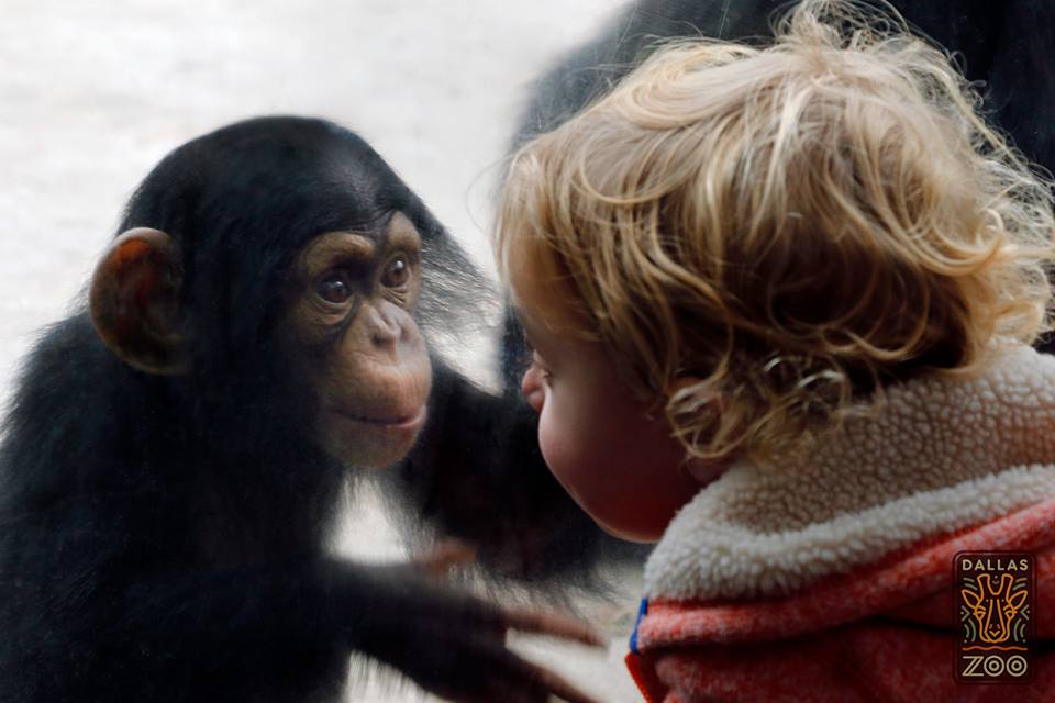 Make some new friends at the Dallas Zoo this weekend. Photo: Dallas Zoo