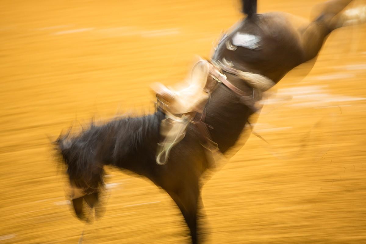 Horse-1-Signature-Photo-Website-1200x800