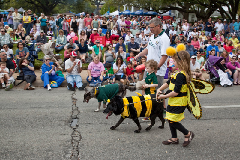 Come watch the pooches on Parade at Lee Park this Easter. Photo: Lee Park and Arlington Conservancy.