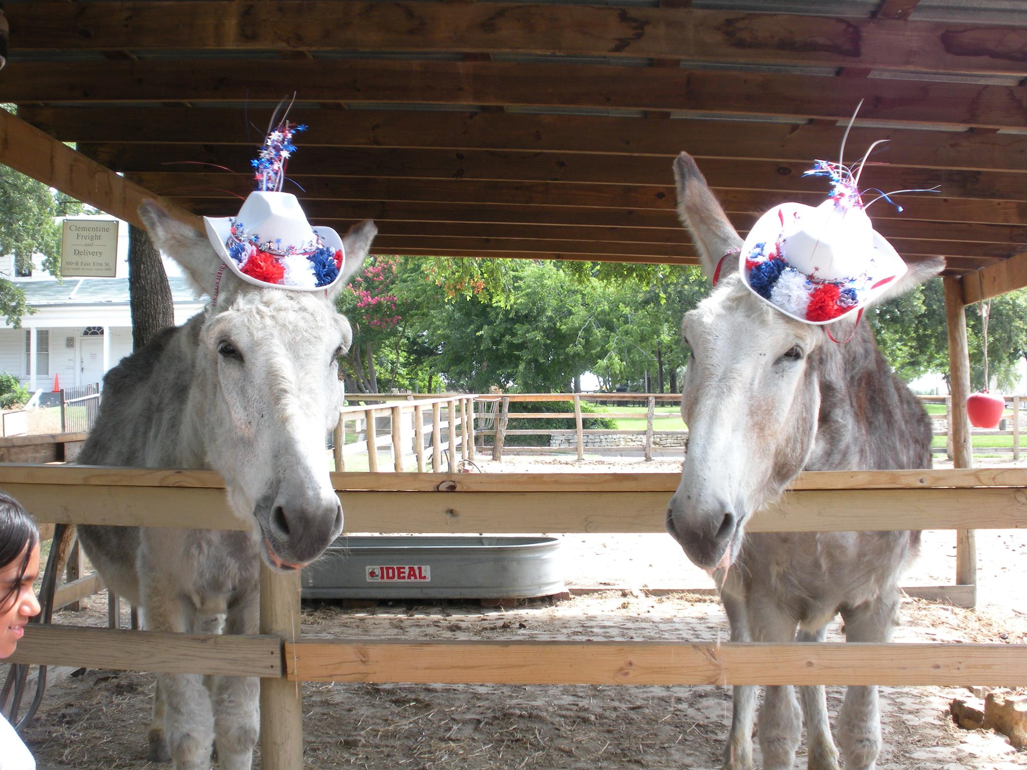 Come say hello to Nip and Tuck this Labor Day weekend at Dallas Heritage Village. Photo: Dallas Heritage Village