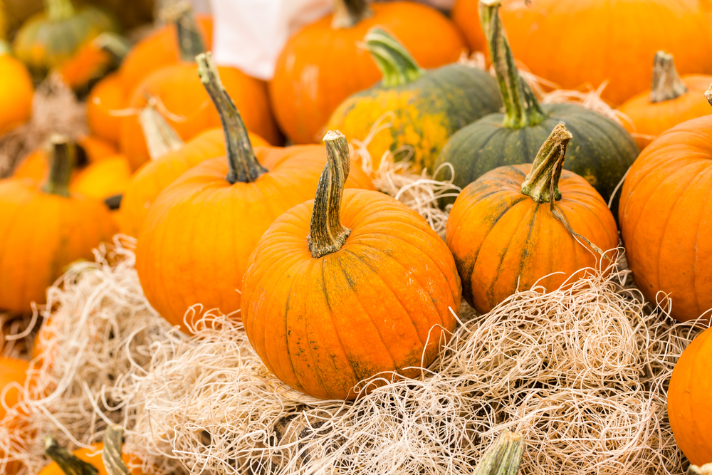 Come peruse the pumpkins at the Kessler Pumpkin Patch. Photo: shutterstock.com
