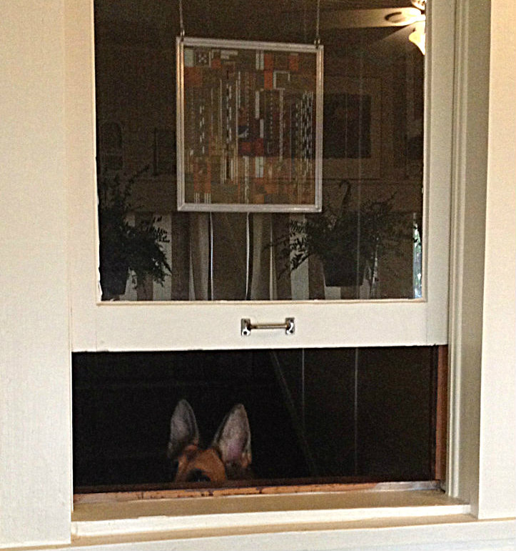 A dog at the window.