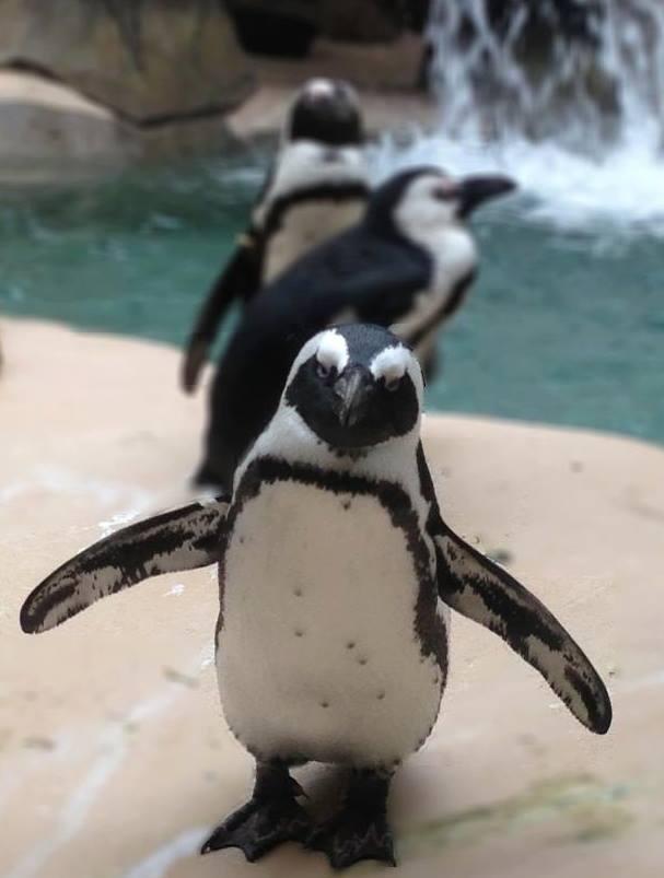 Photo: Dallas Zoo