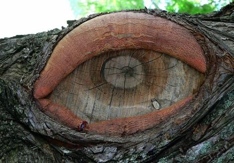 eyeofatree