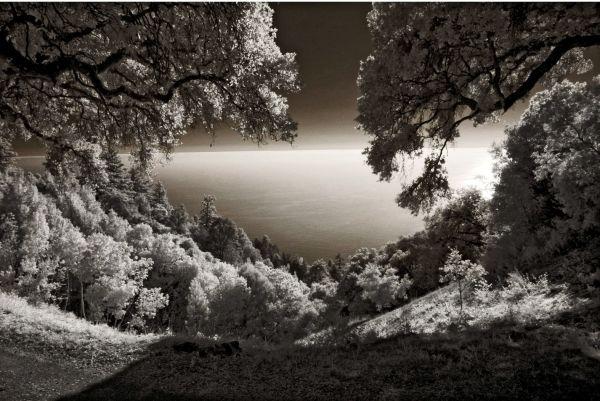 Lou Reed: In the Woods, On the Prairie | Art&Seek | Arts