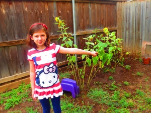 Our valiant, but failed attempt at growing sunflowers. (photo: Therese Powell)
