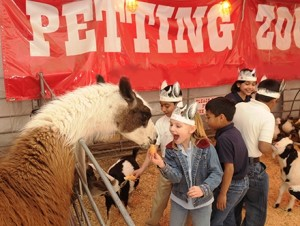 Say howdy to a mama llama at the Fort Worth Stock Show. (Photo: FWSS&R)