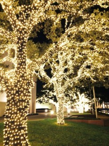 Come see Fair Park lit up with over a million lights this Friday. (Photo: Fair Park)