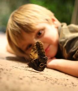 Say hello to some butterflies this spring break. (photo: Katy Burnside/Texas Discovery Gardens)