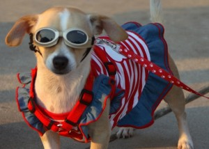 Pooches love a parade, too! Photo: Collin County Farmer's Market