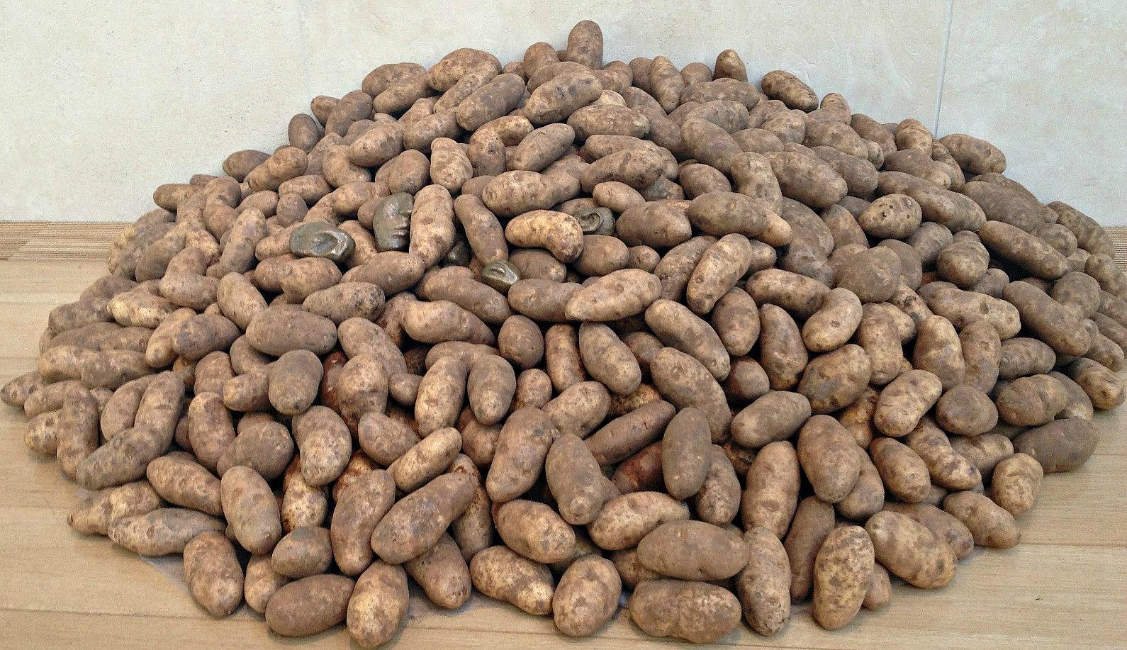 penone's potatoes3