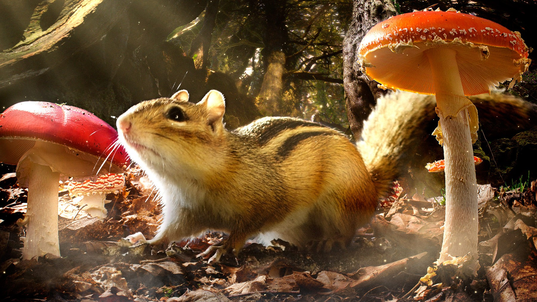 Take an up close look the exciting lives of nature's littlest animals in 'Tiny Giants.' Photo BBC Earth