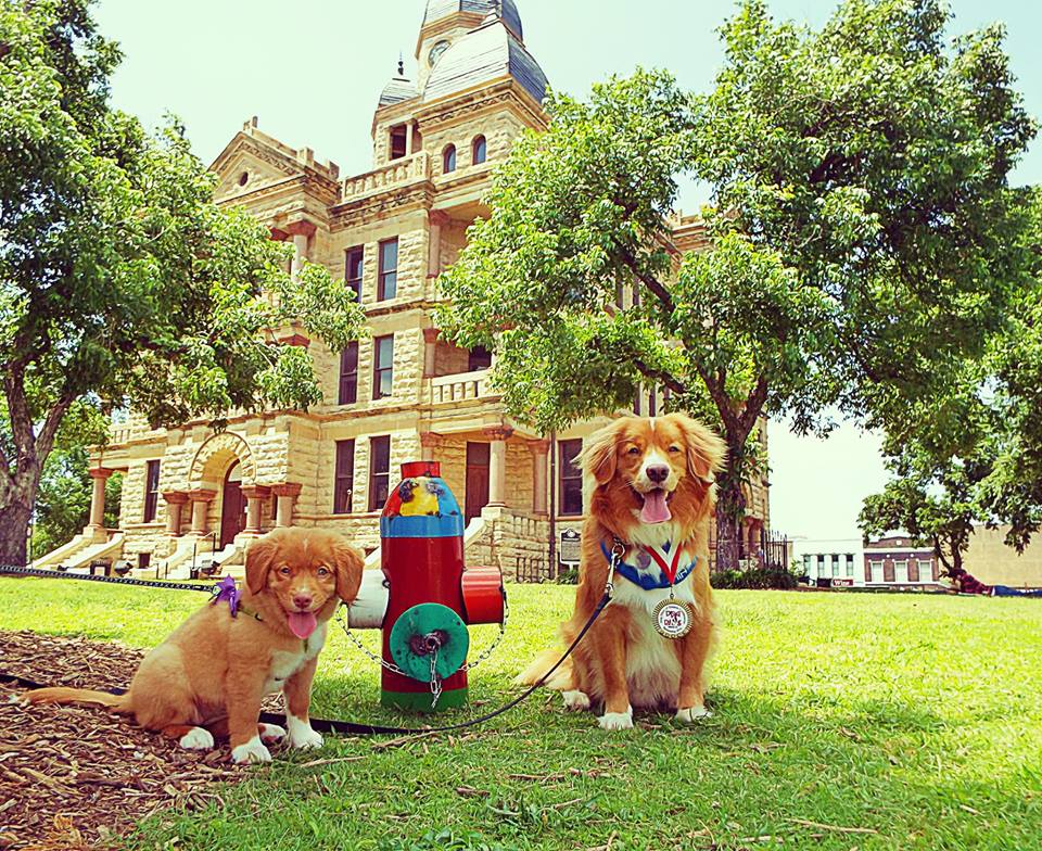 Lager's reign as Spokes Dog is coming to an end. Photo: Dog Days of Denton