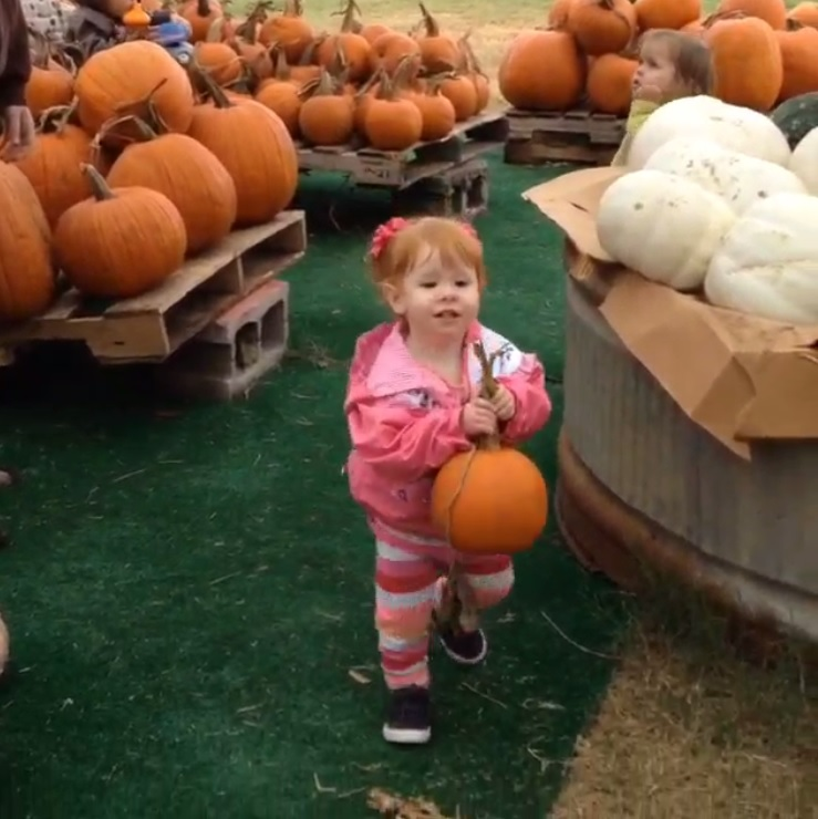 Pick out the perfect pumpkin at Family Pumpkin Days. Photo: Mainstay Farm