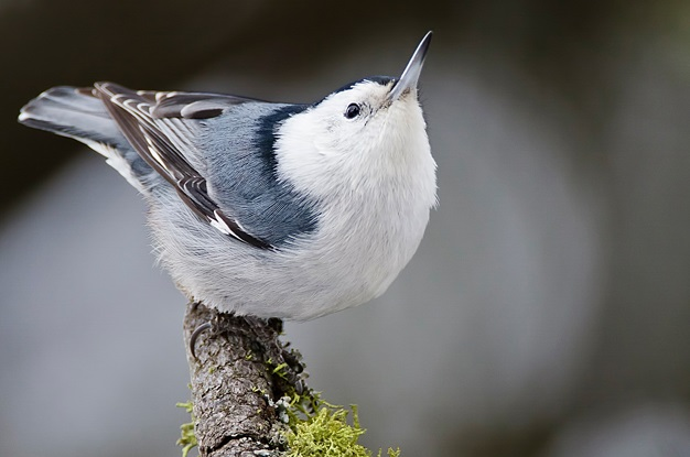 See if you can spot this little guy at Dogwood Canyon Audubon Center's Winter Bird Count: Photo: Larry Umthun