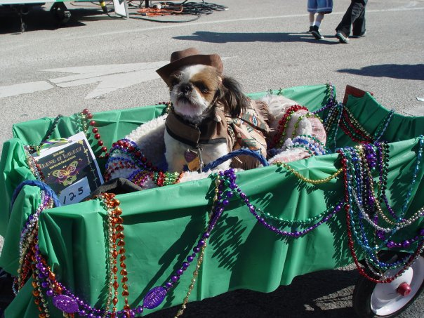 Everyone loves a parade, especially if it includes dogs! Photo: McKinney Texas, Unique by Nature