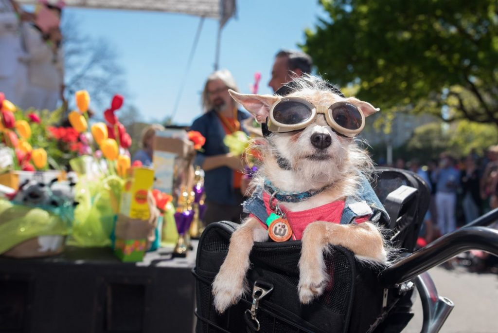 All the cool kids will be at Lee Park on Easter Sunday. Photo: Lee Park and Arlington Conservancy