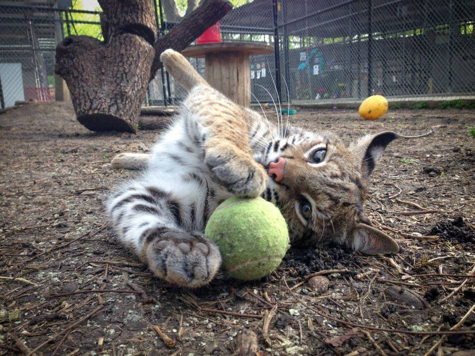 Photo: Karin Saucedo/ In-Sync Exotics Wildlife Rescue and Educational Center