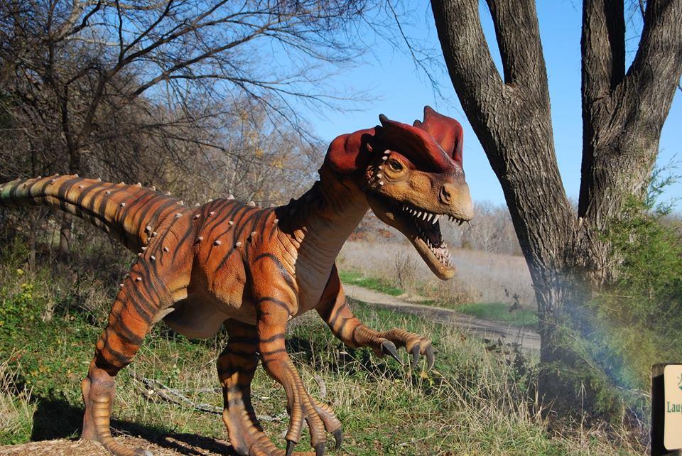 Photo: Jane Burrell/ Heard Natural Science Museum & Wildlife Sanctuary