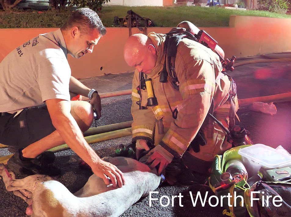 Firefighters providing oxygen to a dog that's inhaled smoke. Photo: Fort Worth Fire Department