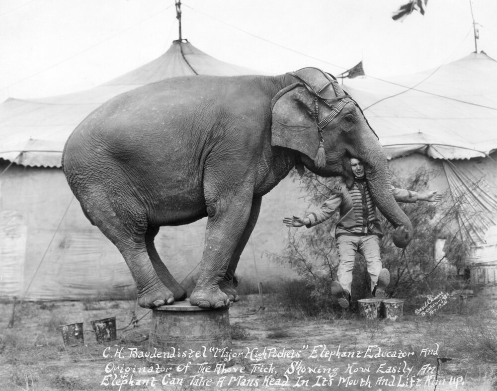 a circus performer with with head in elelphant's mouth