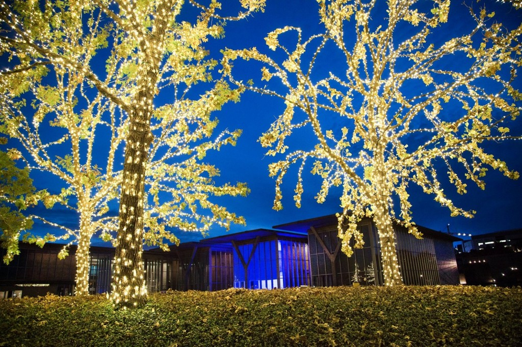 night time shot of the Modern Art Museum with trees in front covered with white lights