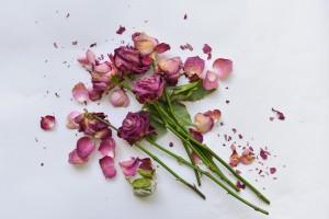 Dead pink long-stemmed roses