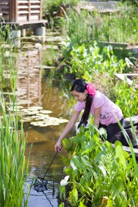 Young girl with long dark hair and pink shirt dips small net into pond.